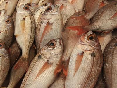 pescadojpg