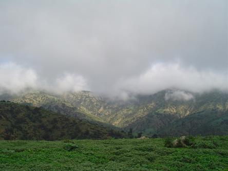 exhuberante vegetacion por las lluviasjpg