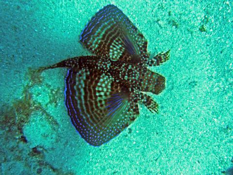 peces-en-jamaica.JPG